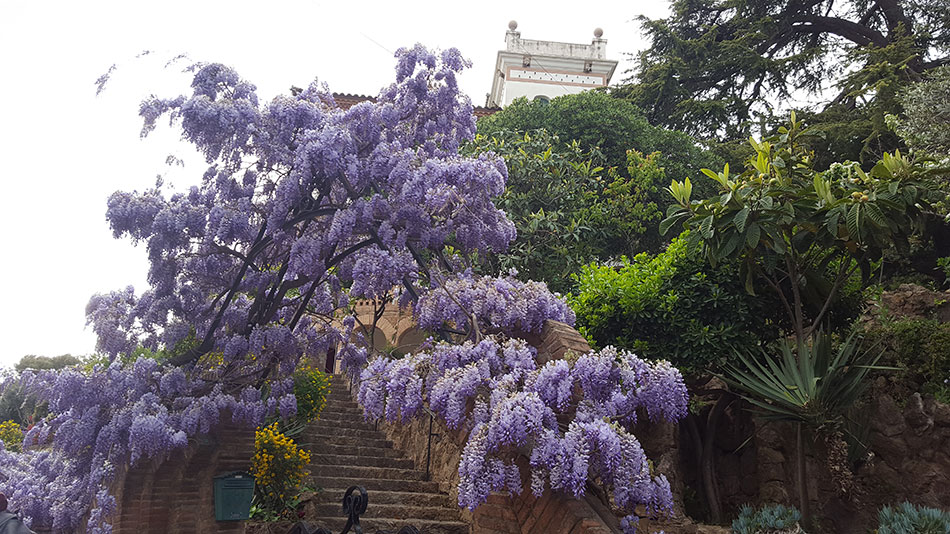 Экскурсия по Барселоне Гауди (фото 14)
