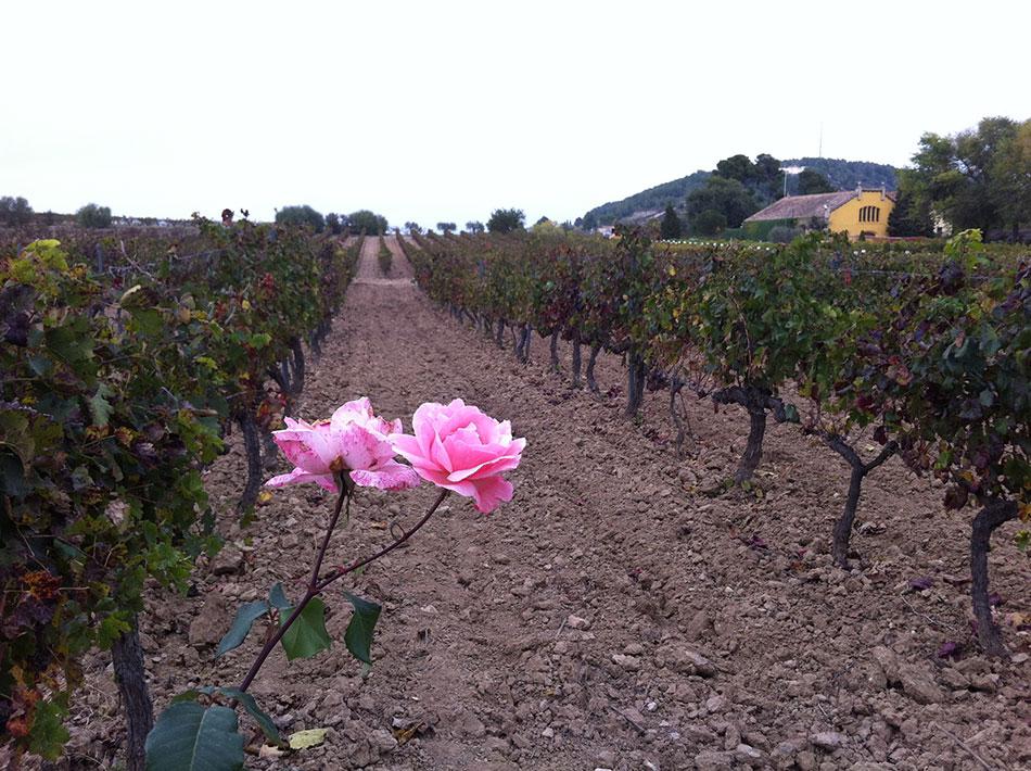 Экскурсия на Гору Монтсеррат и винные погреба (фото 14)